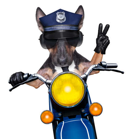 POlICE DOG ON DUTY driving a motorbike with victory peace fingers Stock Photo