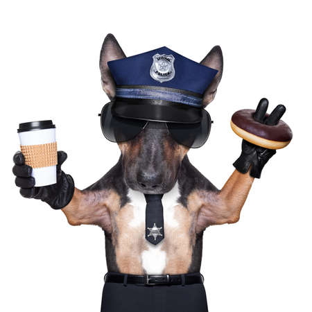 bullterrier: POLICE DOG ON DUTY WITH coffee to go and a donut or Doughnut, isolated on white blank background