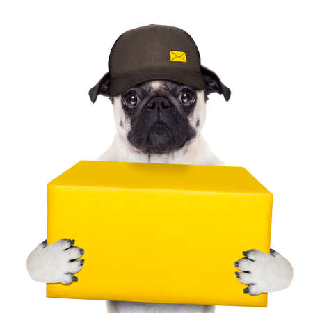 send mail: postman pug  dog delivering a big yellow package
