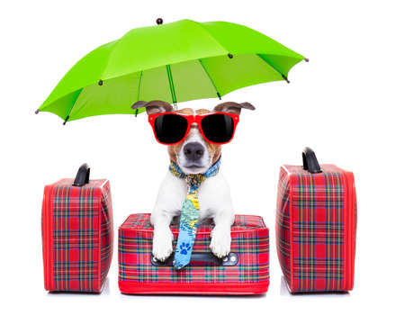 travel bag: dog with luggage ready to go on summer holidays or vacation with umbrella and sunglasses