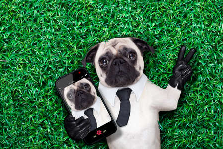 pug dog taking a selfie on grass or meadow in the park with peace or victory fingers photo