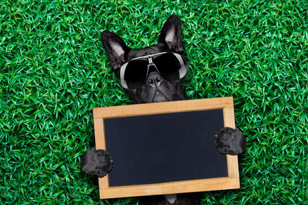 cool dog holding a blank placard or blackboard on the grass or meadow in the park wearing fancy sunglasses photo
