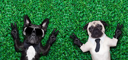 couple of two cool dogs on grass or meadow in the park with peace or victory fingers Stock Photo