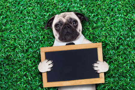 cool pug dog holding a blank placard or blackboard on the grass or meadow in the park wearing fancy sunglasses photo