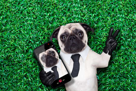 pug dog taking a selfie on grass or meadow in the park with peace or victory fingers