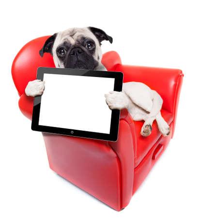 mops pes sedí na červené pohovce relaxaci a odpočinku, zatímco drží obrazovku tablet pc počítače nebo digitální displej, na bílém pozadí