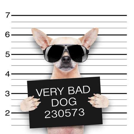 chien: dr�le carlin mignon tenant une pancarte en un mugshot est prise Banque d'images
