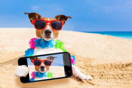 sunny beach: dog at the beach with a flower chain at the ocean shore wearing sunglasses taking a selfie Stock Photo