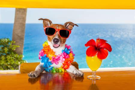perro divertido fresco de beber cócteles en el bar, en una fiesta de club de playa con vista al mar