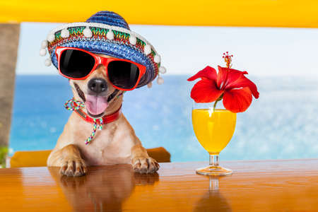 divertido perro chihuahua fresca bebiendo cócteles en el bar, en una fiesta de club de playa con vista al mar