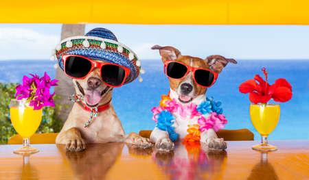 flores de cumpleaños: dos perros divertidos bebiendo cócteles en el bar, en una fiesta de club de playa con vista al mar