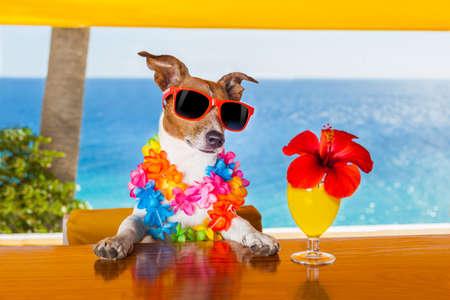 auguri di compleanno: cane fresco divertente bere cocktail al bar in un partito beach club con vista mare Archivio Fotografico