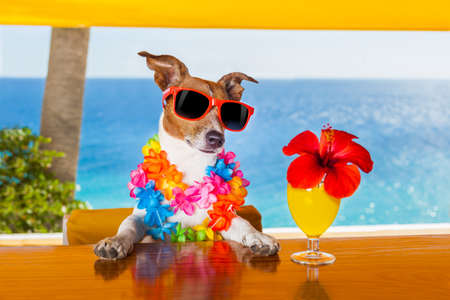 funny animal: funny cool dog drinking cocktails at the bar in a  beach club party with ocean view