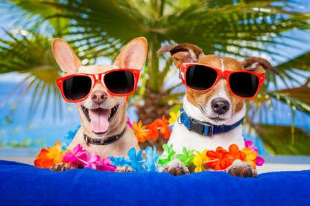 vacaciones en la playa: par de perros en las vacaciones de verano en la playa bajo una palmera