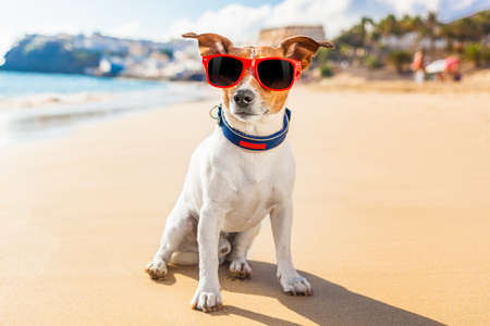 dog on the beach thinking about life and other things Stock Photo