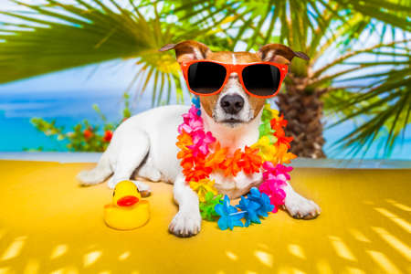 jack russell dog under the shadow of a palm tree relaxing and resting photo