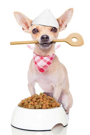 cocinero perro chihuahua con un plato de comida que sostiene una cuchara de cocina en la boca, aislado en fondo blanco Foto de archivo