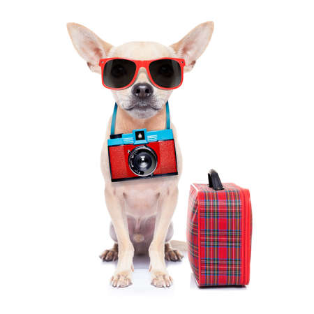 suitcase packing: chihuahua dog with photo camera ready for summer vacation