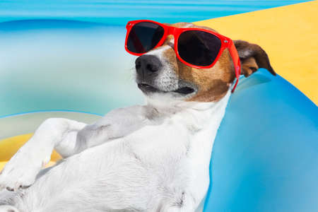enjoy: Dog lying on air mattress by the swimming pool sun tanning with sunglasses relaxing and resting