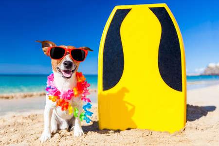 Hund am Strand mit einem Surfbrett trägt eine Sonnenbrille und Blumenkette am Ufer des Ozeans
