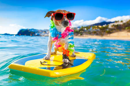 dog surfing on a surfboard wearing a flower chain and sunglasses, at the ocean shore photo