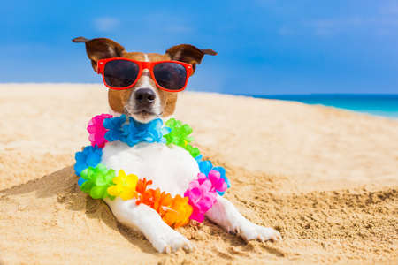 dog at the beach with a flower chain at the ocean shore wearing sunglasses Foto de archivo