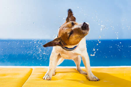 cute small dog shaking at the beach with closed eyes Standard-Bild