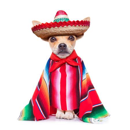 zábava mariachi mexická čivava pes nosit sombrera a červené pončo, izolovaných na bílém pozadí