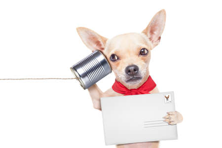 surprised dog: chihuahua dog talking on the phone surprised, holding a blank envelope