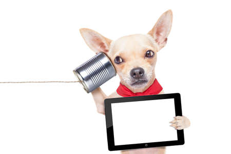 chihuahua dog talking on the phone surprised, holding a blank tablet pc, isolated on white background photo