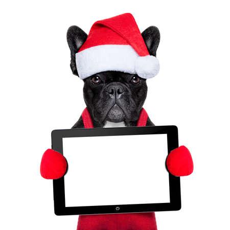 gift in celebration of a birth: Papá Noel del navidad del perro que lleva un sombrero con una pantalla táctil o tablet pc, aislado en fondo blanco Foto de archivo