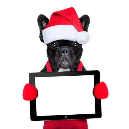 french: Santa claus christmas dog wearing a hat holding a touchpad or tablet pc , isolated on white background