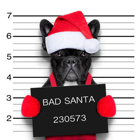 mugshot of a christmas santa bad dog