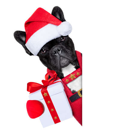 Santa claus christmas dog wearing a hat with a  xmas gift or present for you , besides a white or blank placard, isolated on white background Stock Photo