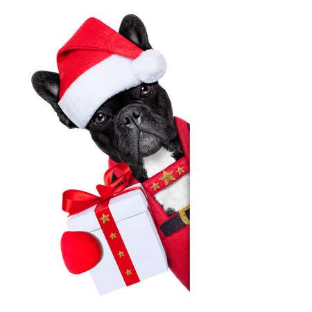 Santa claus jul hund bär en hatt med en xmas gåva eller present till dig, förutom en vit eller tom plakat, isolerad på vit bakgrund