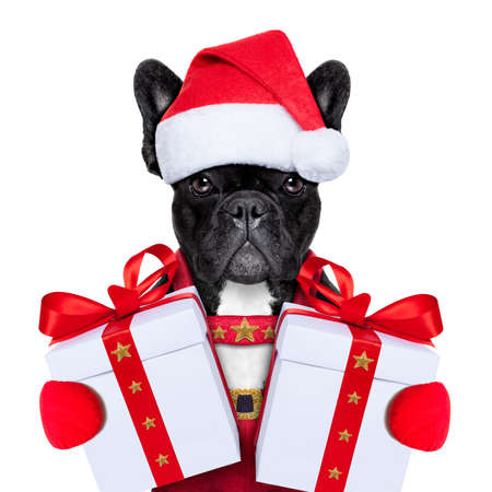 Weihnachtsmann Weihnachten Hund trägt einen Hut mit einem Weihnachtsgeschenk oder Geschenk für Sie