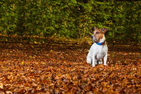 no correr: perro huye en el parque, ahora se pierde y no se puede encontrar Foto de archivo