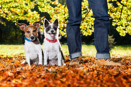 two happy dogs with owner sitting on grass in the park photo
