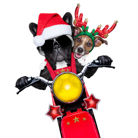 two christmas dogs on a motorbike riding with speed Stock Photo