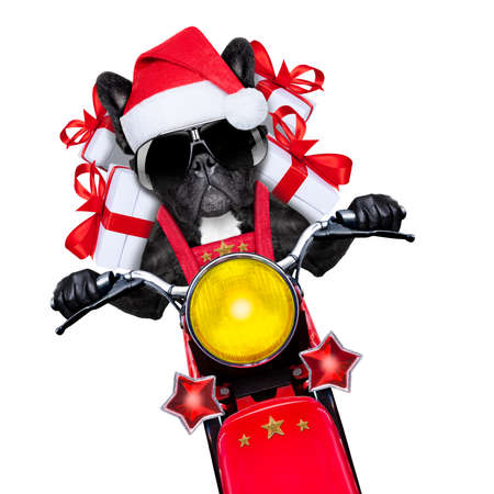 santa claus dog on motorbike bringing presents or gifts to everyone Stock Photo