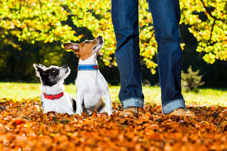 two happy dogs with owner sitting on grass in the park, looking up
