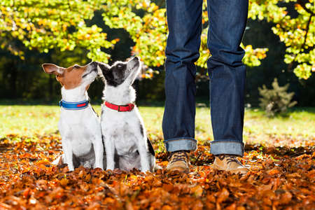 pet leash: two happy dogs with owner sitting on grass in the park, looking up