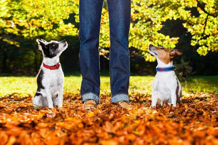 dos perros felices con propietario sentado en la hierba en el parque, mirando hacia arriba Foto de archivo