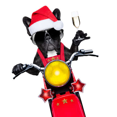 santa claus dog on motorbike toasting cheers to everyone, isolated on white blank white background photo