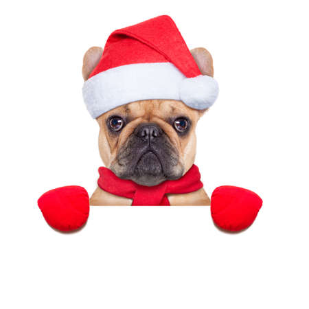 pug: Santa claus christmas dog wearing a hat behind a blank white placard , isolated on white background