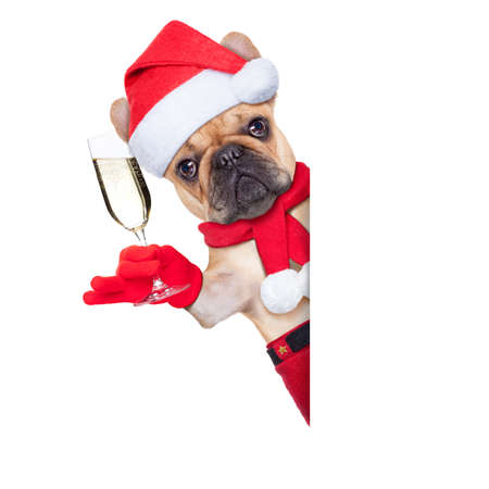 santa claus christmas dog toasting cheers with champagne glass besides white blank placard or banner, isolated on white background photo