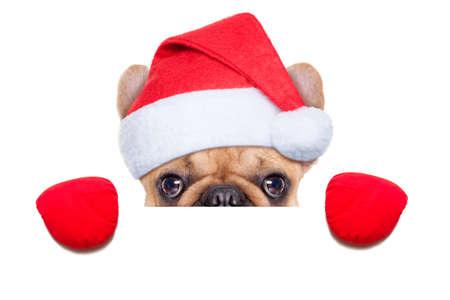 kerst interieur: Santa claus kerst hond het dragen van een hoed achter een leeg wit plakkaat, geïsoleerd op witte achtergrond