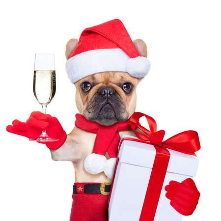 santa claus christmas dog toasting cheers with champagne glass , isolated on white background