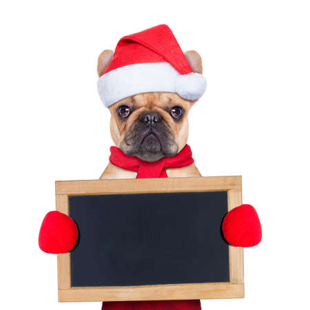 Santa dog wearing a hat holding a blackboard or placard , isolated on white background