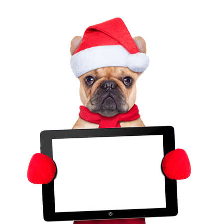 Santa claus christmas dog wearing a hat holding a touchpad or tablet pc , isolated on white background photo